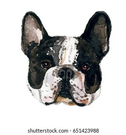 Watercolor illustration of french bulldog breed. Isolated black and white dog's head.