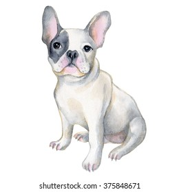 Watercolor illustration of french bulldog. Pet, puppy background. Animal wallpaper.