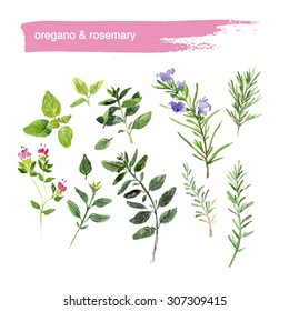 Watercolor illustration of fresh bright colored hand drawn herbs on white background. Good for recipe book illustration, magazine or journal article.