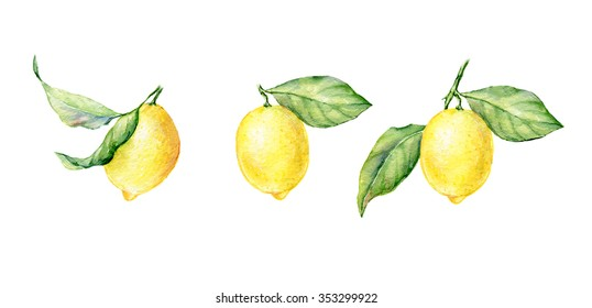 Watercolor illustration of fresh yellow Lemons. Element for design of invitations, movie posters, fabrics and other objects. Isolated on white.