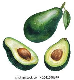 Watercolor illustration. Fruit avocado, half avocado, cut avocado.