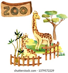 Watercolor illustration of giraffes at the zoo, isolated scene hand drawn on a white background