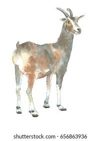 Watercolor Illustration of a Goat