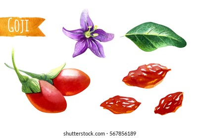 Watercolor illustration of goji berries, leaves and flower,  isolated on white background with clipping path included