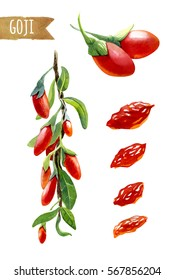 Watercolor illustration of goji berries on a branch isolated on white background with clipping path included