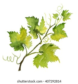 Watercolor illustration of grape leaf. Raster design element.