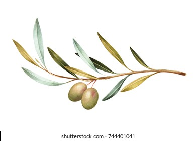 Watercolor illustration of green olives on branch. Isolated design element.