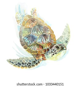 Watercolor illustration of a green sea turtle