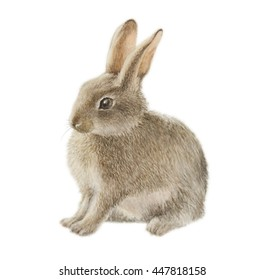 watercolor illustration, hand drawing, isolated wild rabbit image
