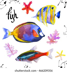 Watercolor illustration with hand drawn aquarium exotic fish on white background.