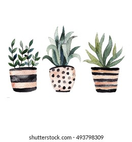 Watercolor illustration. Hand drawn home plants in cute pots.Hand drawn illustration perfect for gift cards, post cards, greeting cards, t-shirts and other designs.