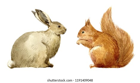 Watercolor illustration of a hare and squirrel. Cute forest animals