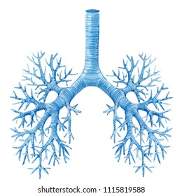 Watercolor illustration of a human lung, Breathing Rights. bronchi