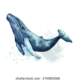 Watercolor illustration, humpback, blue whale. Indigo color. Isolated on white background. Cute underwater animal art. Design for art print, decor, card, nature and ocean theme, cover, poster, product