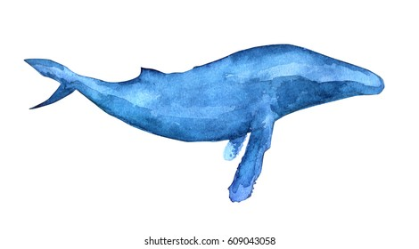 Watercolor illustration of Humpback whale