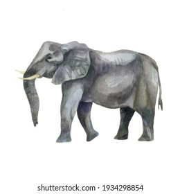 Watercolor illustration image of an elephant. Elephant hand-drawn in watercolor.