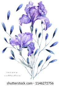 Watercolor illustration with iris. Painting fresh flowers on white background Gift card Flowers shop 700 dpi