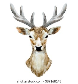 watercolor illustration isolated deer, young deer with small horns