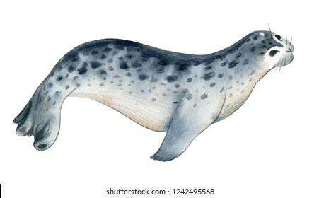 Watercolor illustration isolated on white background. A gray  sea calf ram lies. Splashes sketch of wild sea north animals