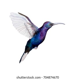 watercolor illustration kallibri. Isolated. Can be used as a logo.