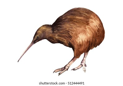 Watercolor illustration of a kiwi bird isolated on white background