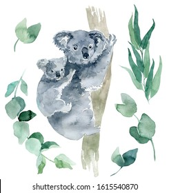 watercolor illustration of a koala with eucalyptus branches on a white background. The symbol of Australia is a cute koala bear with a cub behind its back. Koala sketch hand-drawn.