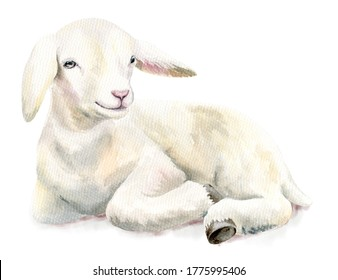 Watercolor illustration Lamb, Easter image, portrait goat, delicated design element
