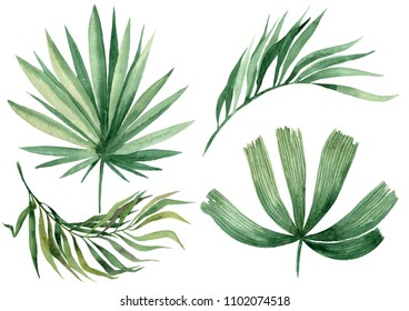Watercolor illustration of leaves, isolated on white background