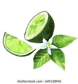 watercolor illustration of lime citrus fruit with leaves on white