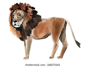 Watercolor illustration of a lion