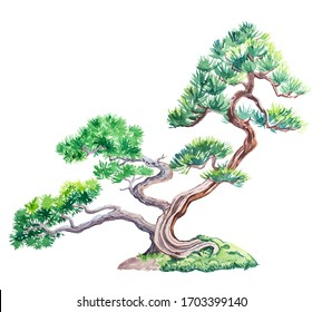 Watercolor illustration of mountain pine tree print. Bonsai is isolated on a white background.