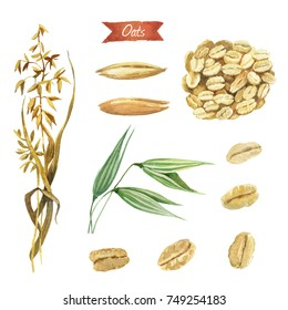 Watercolor illustration of oat plant; seeds and flakes isolated on white background with clipping paths included
