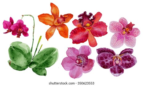 Watercolor illustration of orchid, botanical art, a set of different colors of orchids, pink orchid, purple orchid. Watercolor phalaenopsis Orchid flowers set.