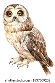 watercolor illustration, owl drawn on an isolated white background.