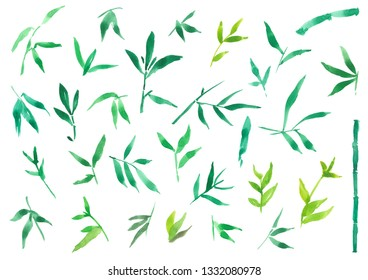 watercolor illustration painting of green bamboo leaves, isolated plant element on white background