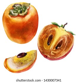 Watercolor illustration. Persimmon. Persimmon fruit, half persimmon, cut off part of persimmon.
