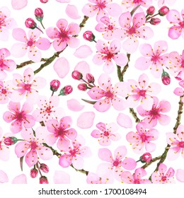Watercolor illustration of pink cherry blossom. Hand painted spring time flower pattern.