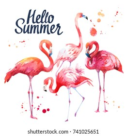 Watercolor illustration with pink flamingo on white background. Tropical bird. Paradise.