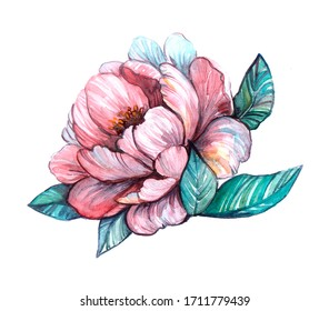 Watercolor Illustration of a Pink Peony Flower with Leaves