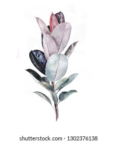 Watercolor illustration of plant. ficus