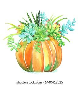 White Pumpkin And Succulents Stock Illustrations Images Vectors