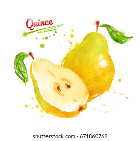 Watercolor illustration of quince, whole and half with leaf, with paint smudges and splashes.