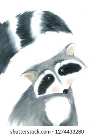Watercolor illustration of raccoon