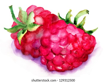 Watercolor illustration of Raspberry fruit