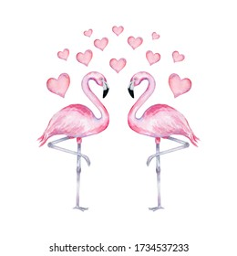 Watercolor illustration of realistic flamingo in love with hearts on a white background. Valentine's Day flamingos.