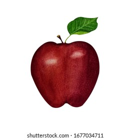 Watercolor illustration of red apple.Isolated on white background. Can be used as pattern for embroidery, greeting card, sticker, print on textiles and other souvenir products.
