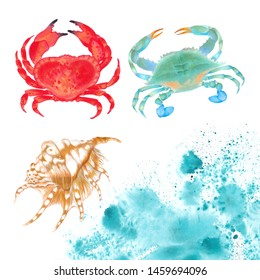 Watercolor  illustration of red crab and blue crab with shell with watercolor splash. Hand drawn. Isolated on white