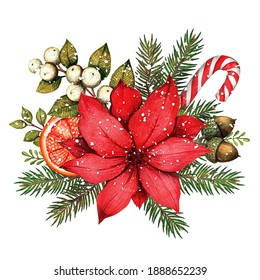 watercolor illustration with red poinsettia, branches and berries