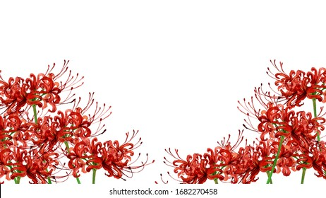 Watercolor illustration of red spider lily