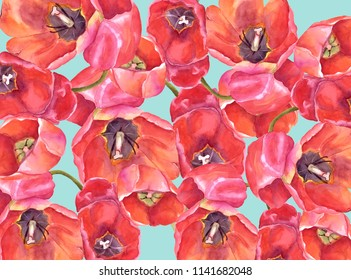 Watercolor illustration of red tulips on ble background